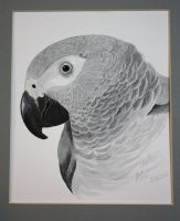 Alfie, African Grey Parrot by DragonsDust