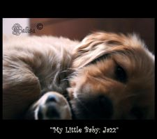 My little baby... Jazz by calisa