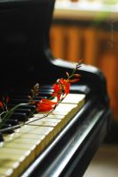Grand piano by TheRedGirl