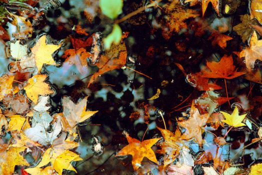 Leaves in The Water by jeffreyverity