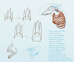 Excadrill Anatomy Doodles by Weirda208