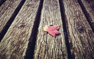 red leaf by DejanB