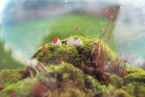 moss terrarium by million-dandelions