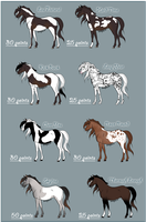 Horse Point Adopts by WildDragonfly