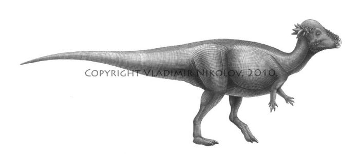 P. wyomingensis by T-PEKC