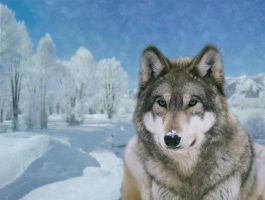Winter Timber Wolf by Kaito42