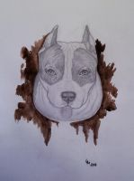Amstaff (pencil) by AlexandraDart