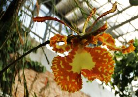Tropical orchid 3 by WolfyKaia