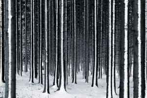 winter in the black forest by tfprince