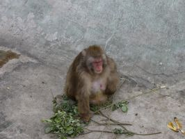 Monkey, Moscow Zoo by Garr1971