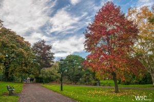 Palmertson Park by WilljCreations