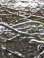 Snowy Branches 2 by dull-stock