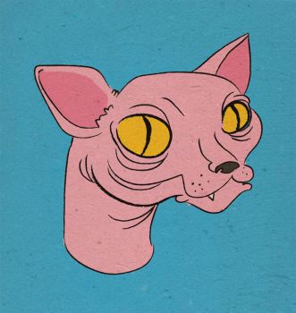 Hairless Cat by saintbabe