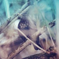Catbird Tales by Anark8