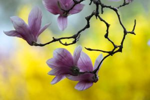 Spring Blossom 7 by Art-Photo