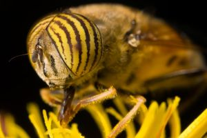 Hungry Hoverfly V by dalantech