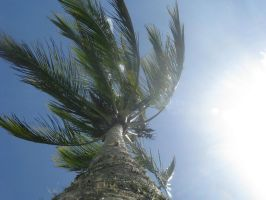 Wind in the palm tree by saiquarx