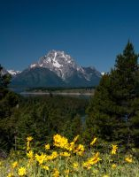 Mt Moran Wildflowers by mikewheels