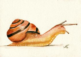 snail in watercolor by Drehli