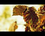 the chronicles of a leaf by codrinseth