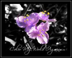 Color My World Again... by mixx