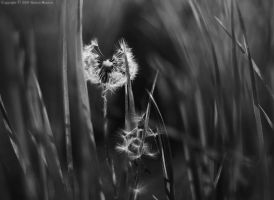 Meadow ... II bw by wroth