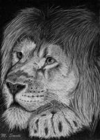 lion by photonline