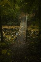 Small Bridge in the Forest 2 by Danimatie