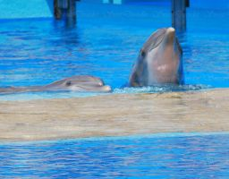 Dolphins by SweetDisorder