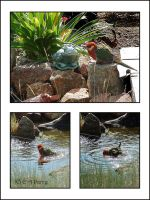 Pond Visitor Collage by AdamsWife