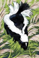 Skunk by mbarton