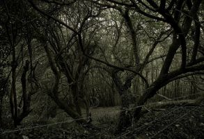 barbed woodland by WillJH