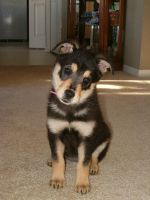 Snickers when she was a puppy by courtniemiller