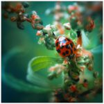 Little Creatures 022 by Frank-Beer
