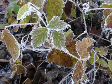 Leafs in the Icy Winter by MariMermaid