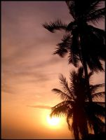 Palms on Phangan by Flarup