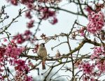 Spring song. by Phototubby