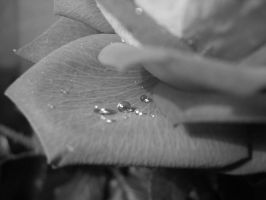 Pearls by 8magda
