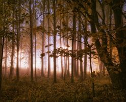 Glowing Forrest II by MikkoLagerstedt