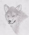 wolf realism 1 by ookamie-lover