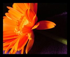 Orange Flower by paledeath