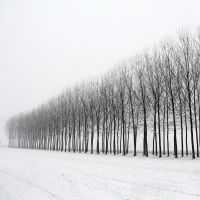 Snow in the Po Valley by MarioDellagiovanna
