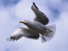 Gull Wings by InayatShah