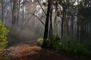 Bindaree Track Fog by Bjay70