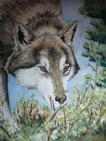 wolf 1 by imcy