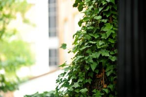 Ivy 2 by AndersonPhotography