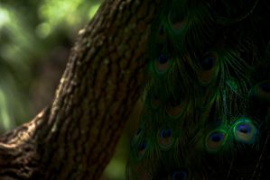 tail feathers by RjohnArt