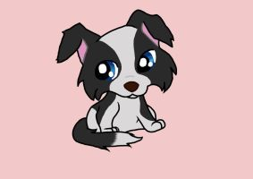 Border Collie Puppy by PonyAdler86