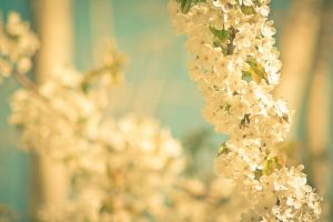 sun kissed in spring by Catjuschka