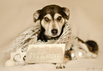 Welcome little stray dog by WinonaPhotographie